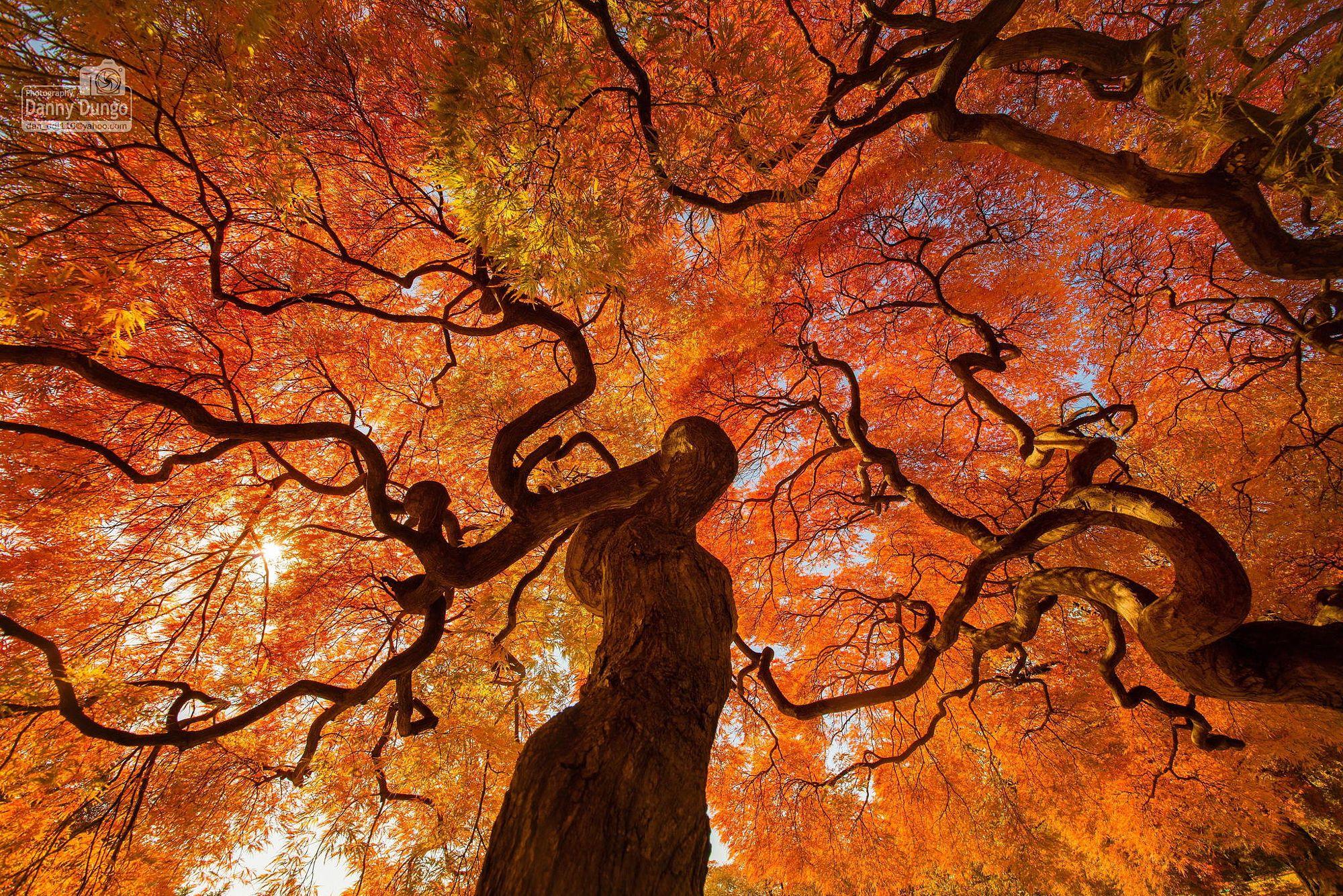 Autumn tree at shinjuku gyoen national park at Tokyo