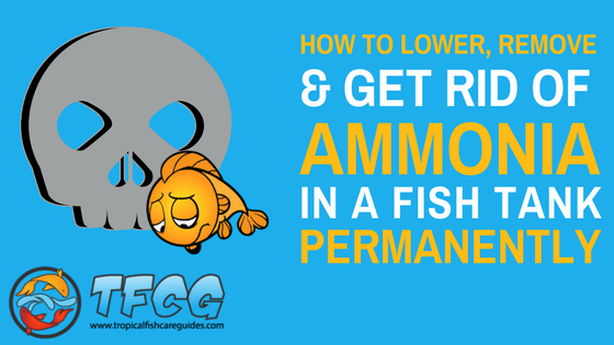 25079b6f0aeef240c205b358a85fa338 - How To Get Ammonia Out Of My Fish Tank