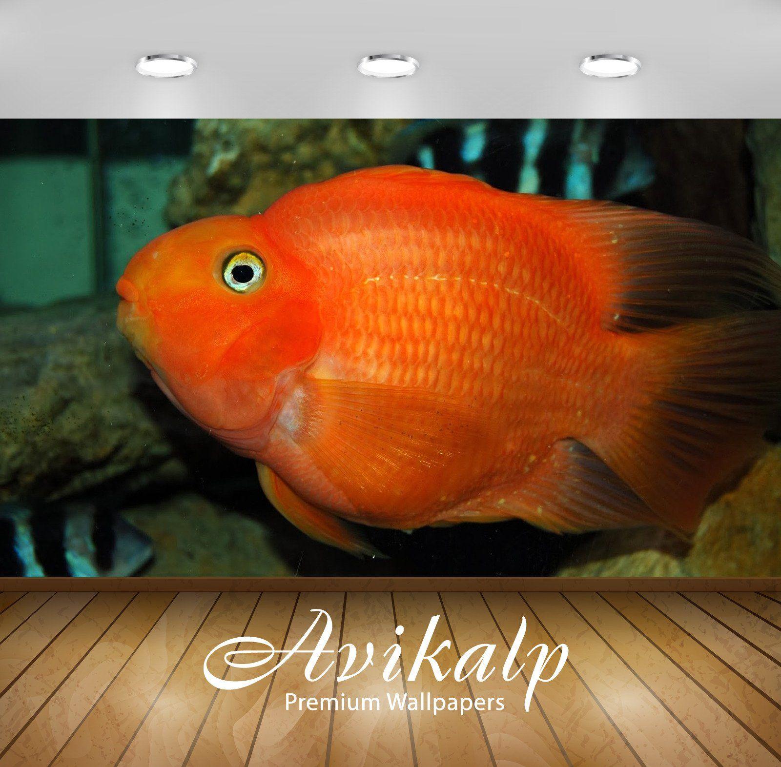 Avikalp Exclusive Awi2938 Red Ikan Parrot Fish Full Hd