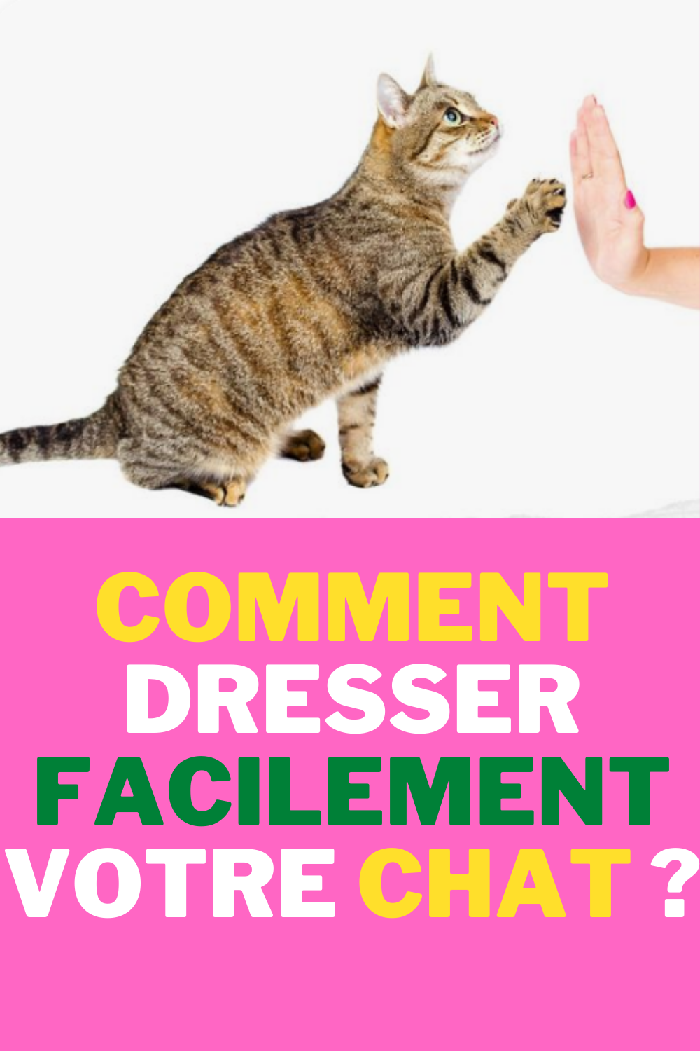 Comment Dresser Facilement Votre Chat ? #chat #cat #cats #catsofinstagram #gato #of #catstagram #instacat #catlover #instagram #chats #chaton #katze #meow #love #catlife #cute #catoftheday #kitten #neko #kitty #catlovers #gatto #cutecat #pet #pets #animal #animals #animaux #bhfyp