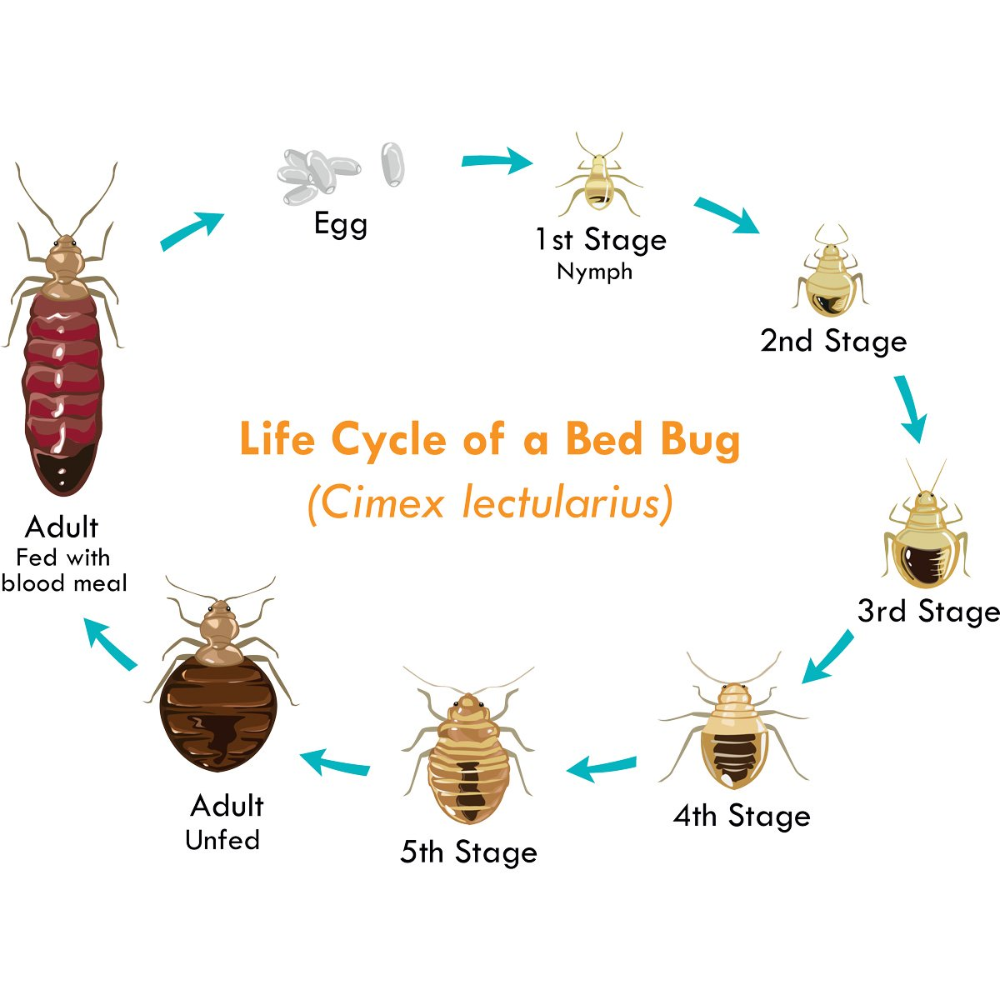 How to Get Rid of Bed Bugs A DIY Guide (With images