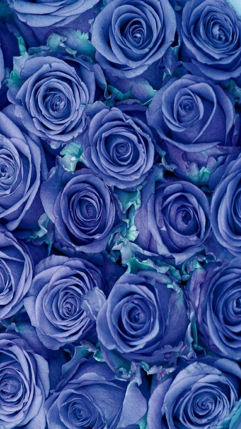 Flowers Blue roses. Flower phone wallpaper, Blue roses