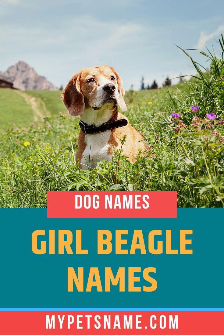 Beagle Namen