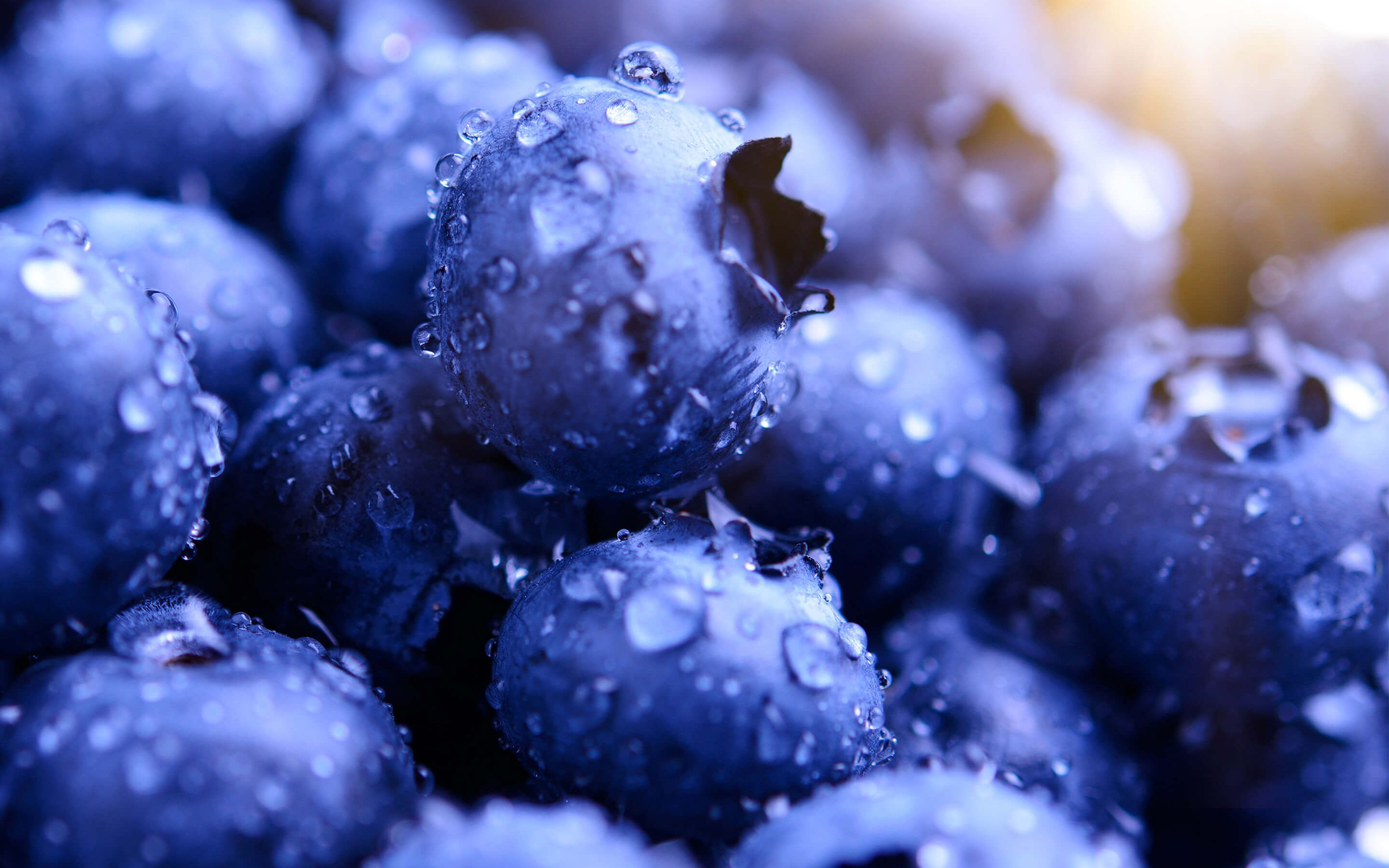 Blueberries Macro Food Photography Wallpaper Blueberry