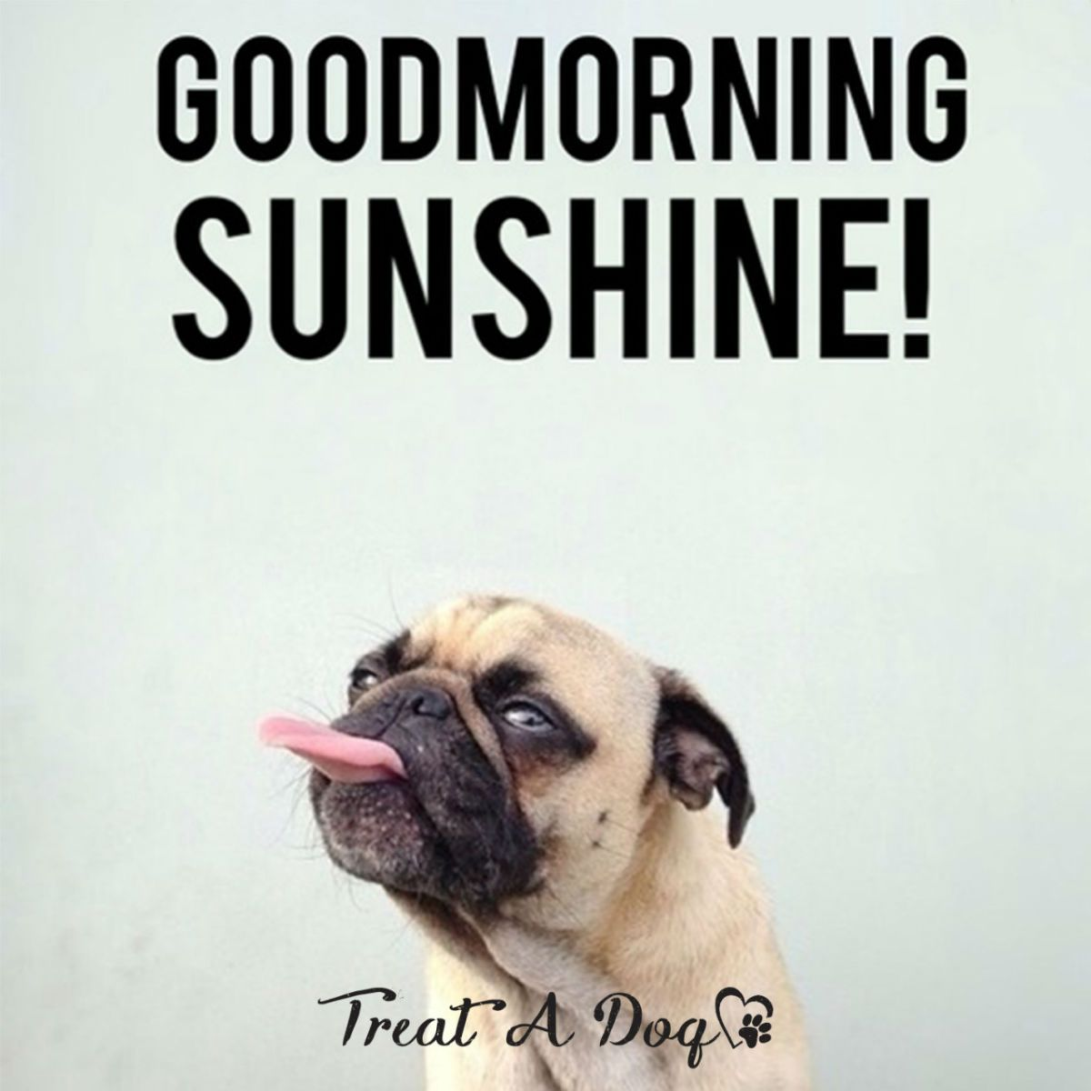 Funny Good Morning Memes Blognana Pugs Good Morning Good