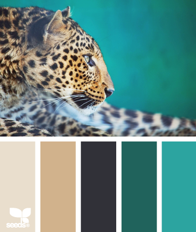Color: Creature Color by Design Seeds - grey, tan, navy, teal, turquoise. Master bedroom colours
