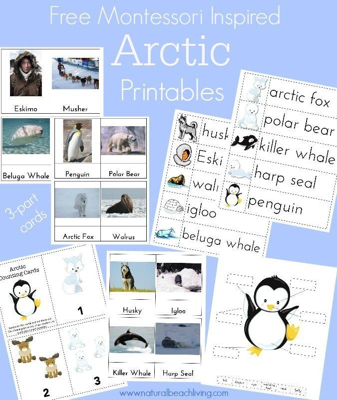 montessori arctic activities polar regions free printables free printables montessori. Black Bedroom Furniture Sets. Home Design Ideas