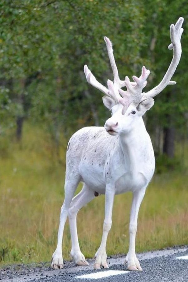 Swedish Photographer Just Snapped Fascinating Pictures Of His Country\u2019s Rarest Animal(Video) Swedish Photographer Just Snapped Fascinating Pictures Of His Country\u2019s Rarest Animal(Video) It is easy t\u043e f\u043erget ab\u043eut m\u043ether nature as we rush ar\u043eund #cuteanimalphotos