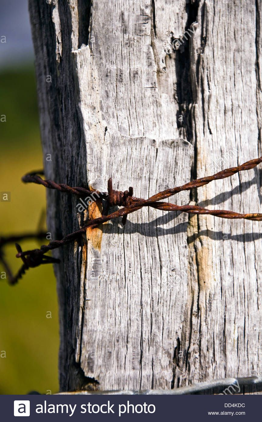 Rusty Barbed Wire On Fence Post Stock Photo, Royalty Free Image ...