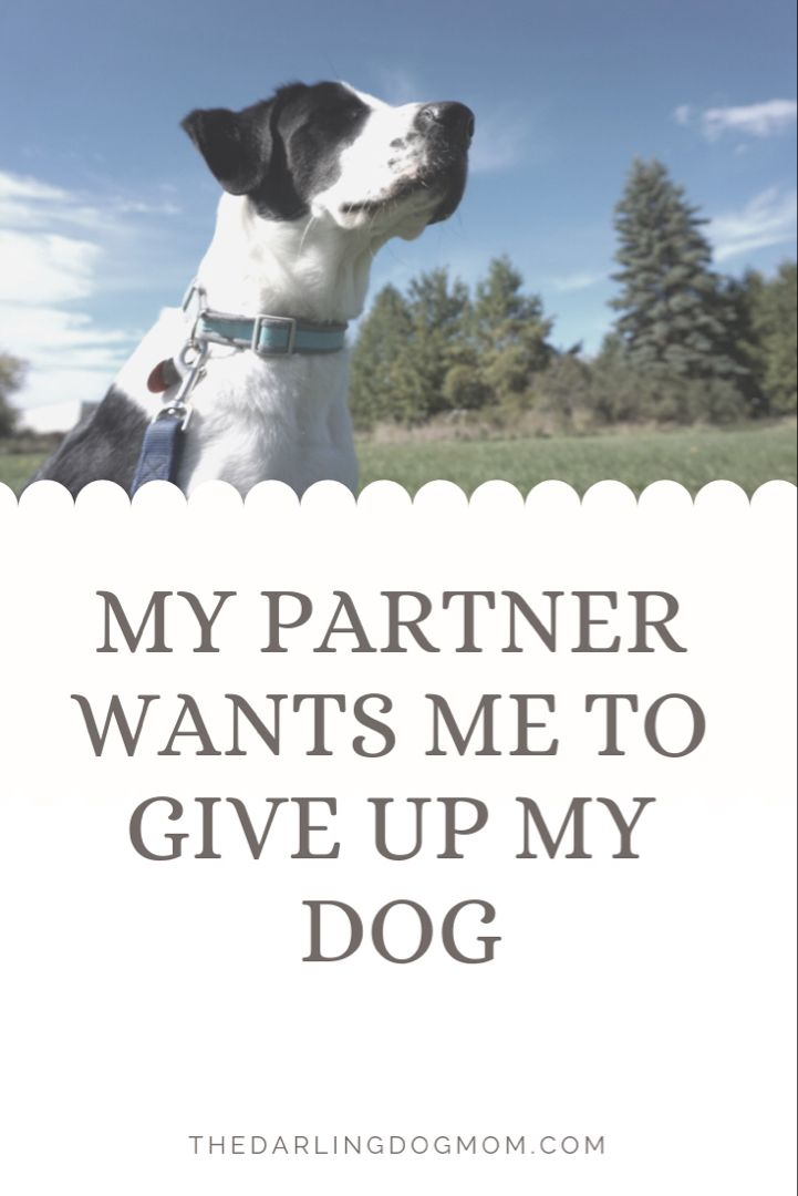 My Partner Wants Me To Give Up My Dog Pet Allergies Pets Dog Mom