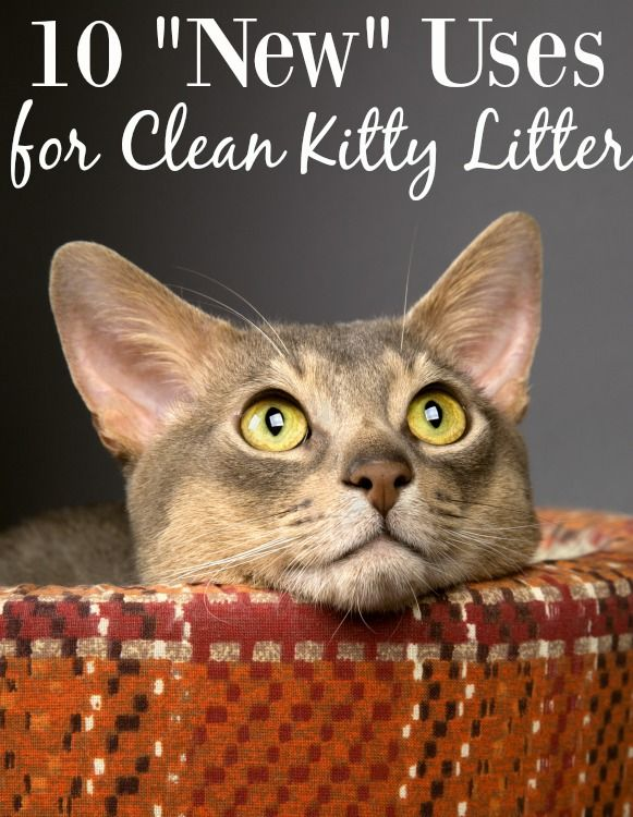 10 New Uses For Clean Cat Litter Cleaning Kitty Litter Cat Litter Litter