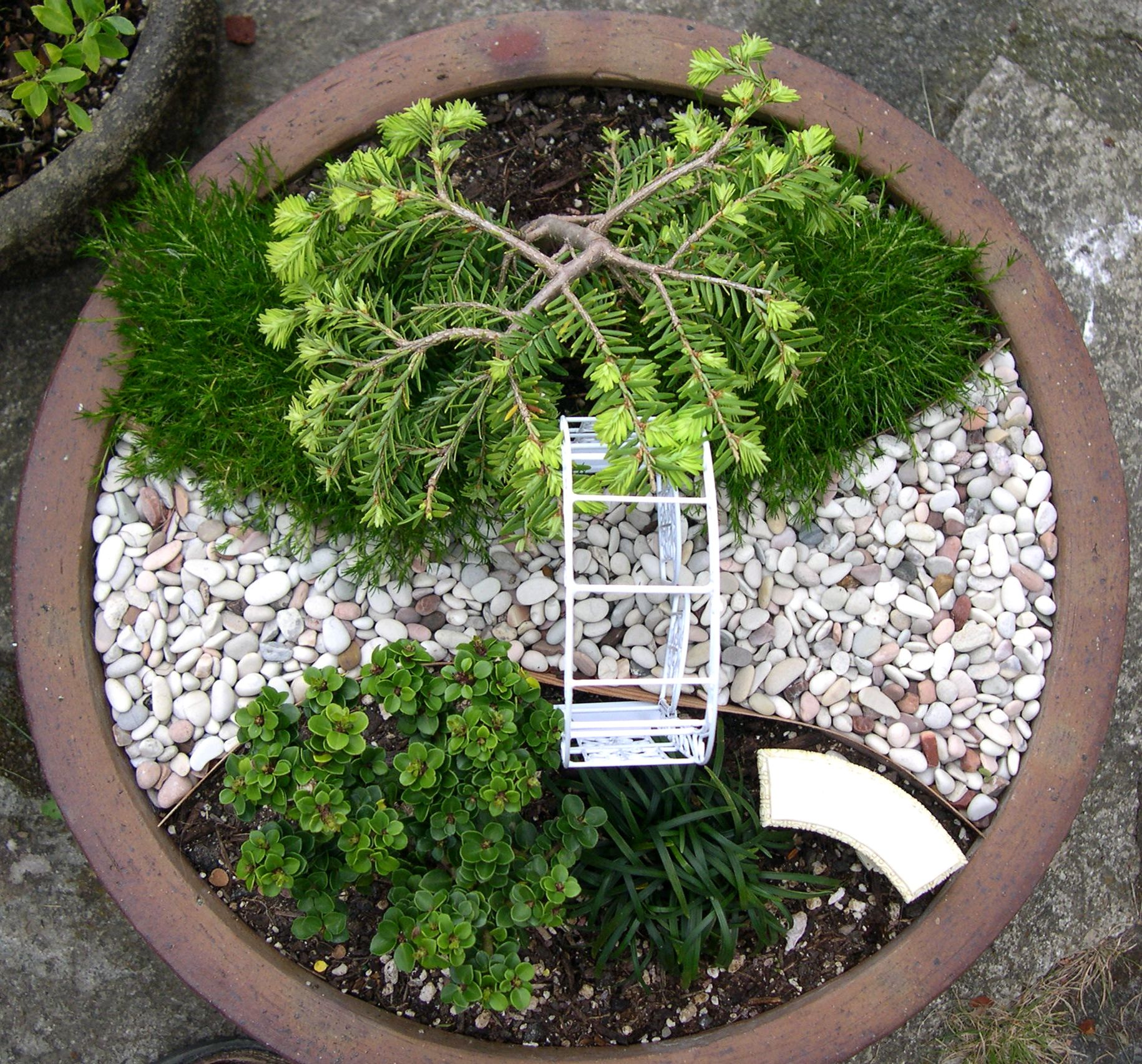 Why Conifers Make Great Miniature Garden Trees!