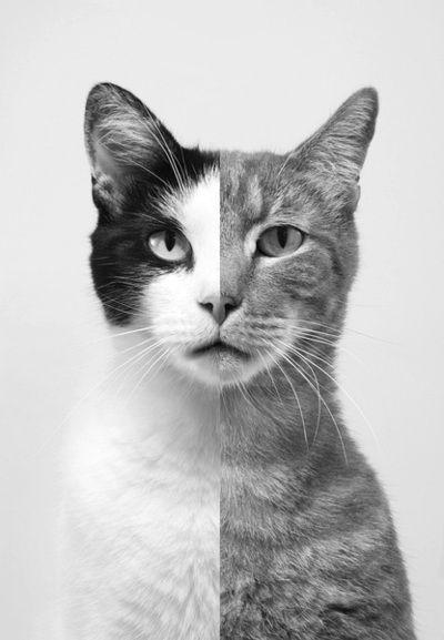Doble gato