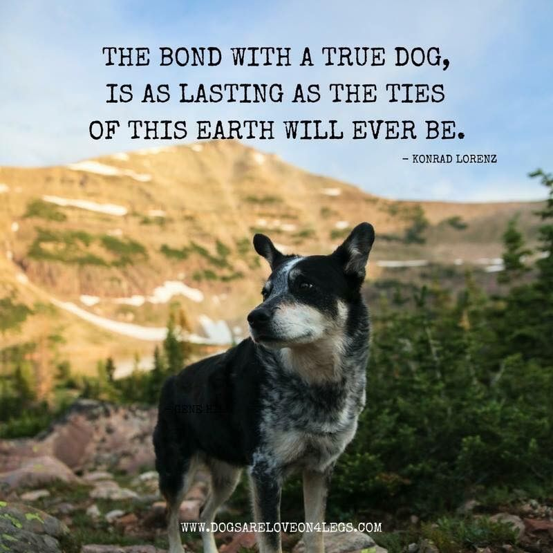Pin By Pet Sheltered On Dog Signs Dog Training Hiking Dogs Dog