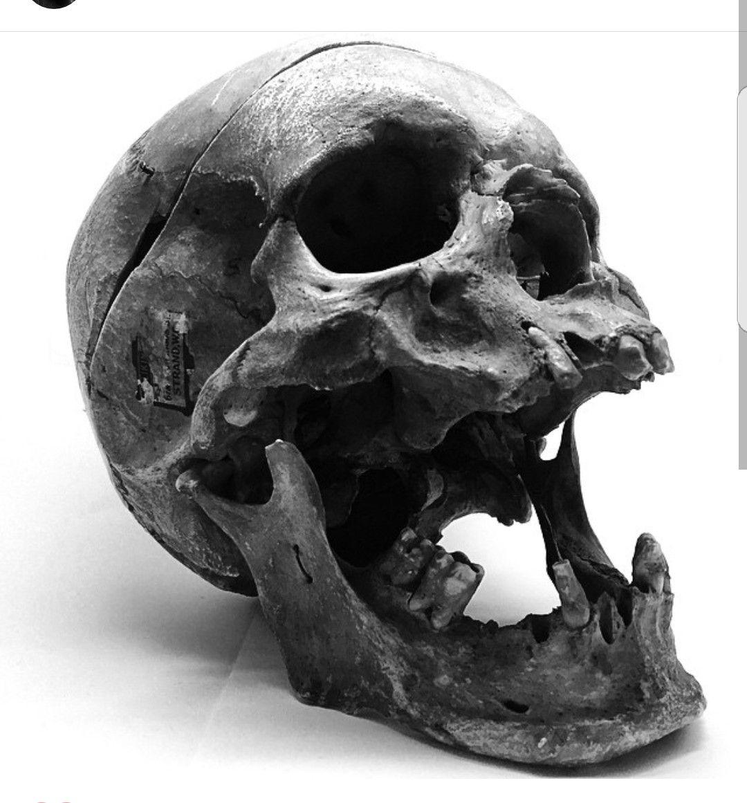 Обои черепа, Катакомбы, кости. Разное foto 13