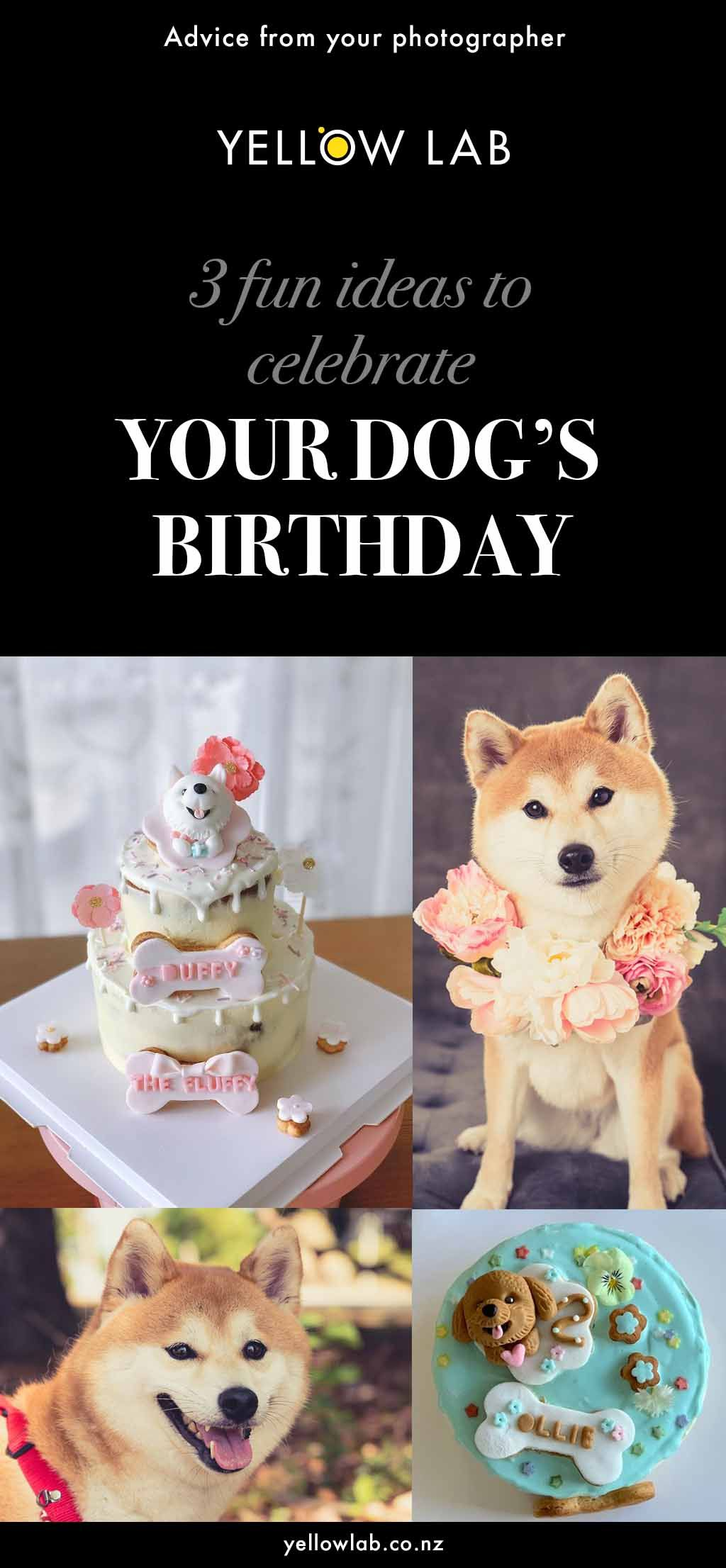 Blog With Fun Ideas To Celebrate Your Furbaby S Birthday With Him
