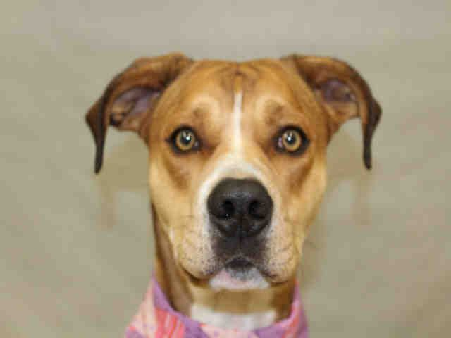 Adopt A Pet In Colorado Springs Humane Society Of The Pikes Peak