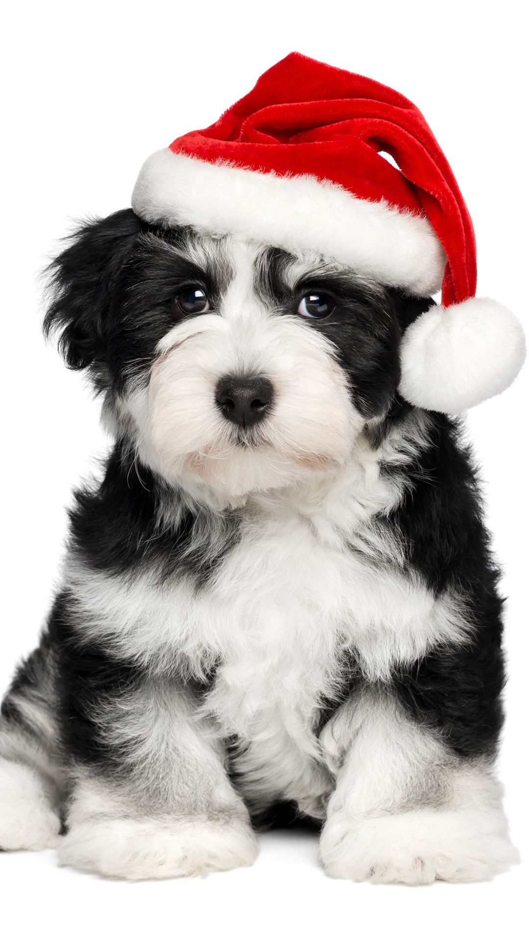 Warm Christmas Dog iPhone 6 wallpaper Dogs, puppies