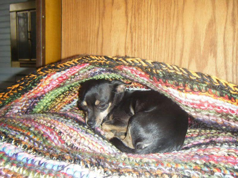 Pet Cave CROCHET Dog cave, Crochet dog, Pets
