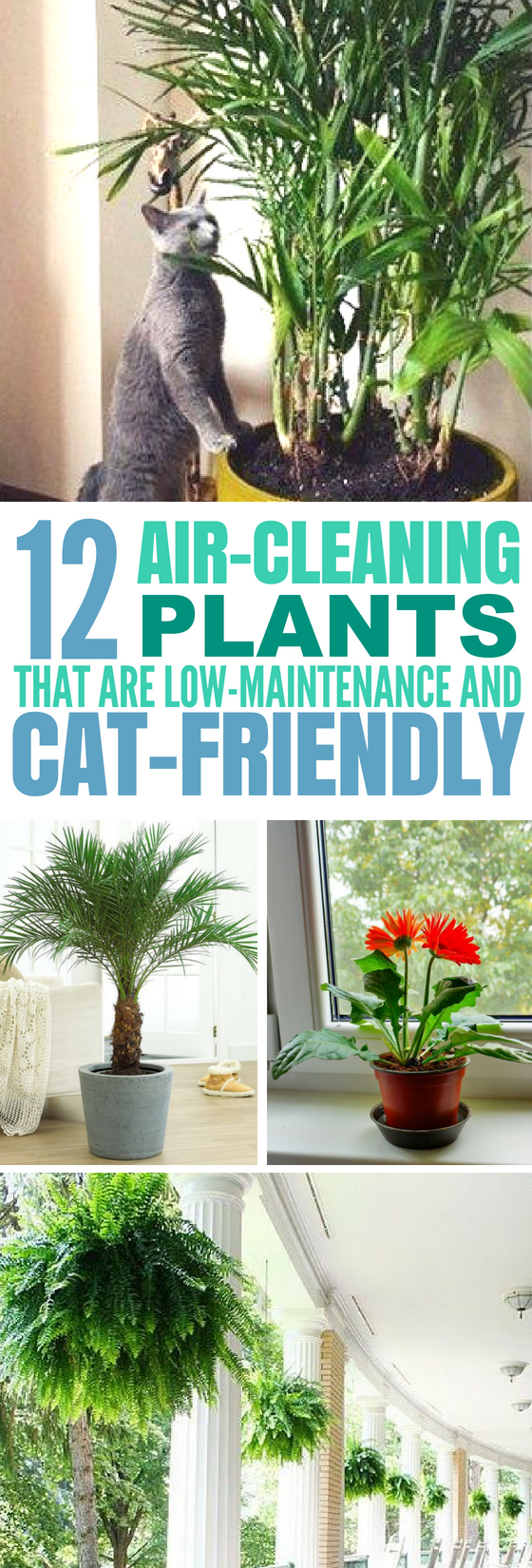 12 Common Houseplants Safe For Cats That Filter Your Air Air Cleaning Plants Common House Plants Houseplants Safe For Cats