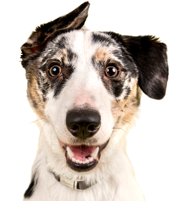 Adopt a dog or cat today! Search for local pets in need of