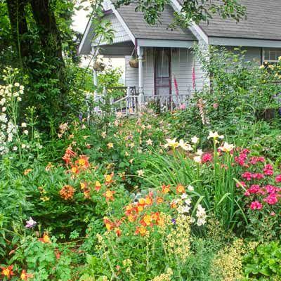 17 bsta bilder om Flowering outdoor plants p Pinterest