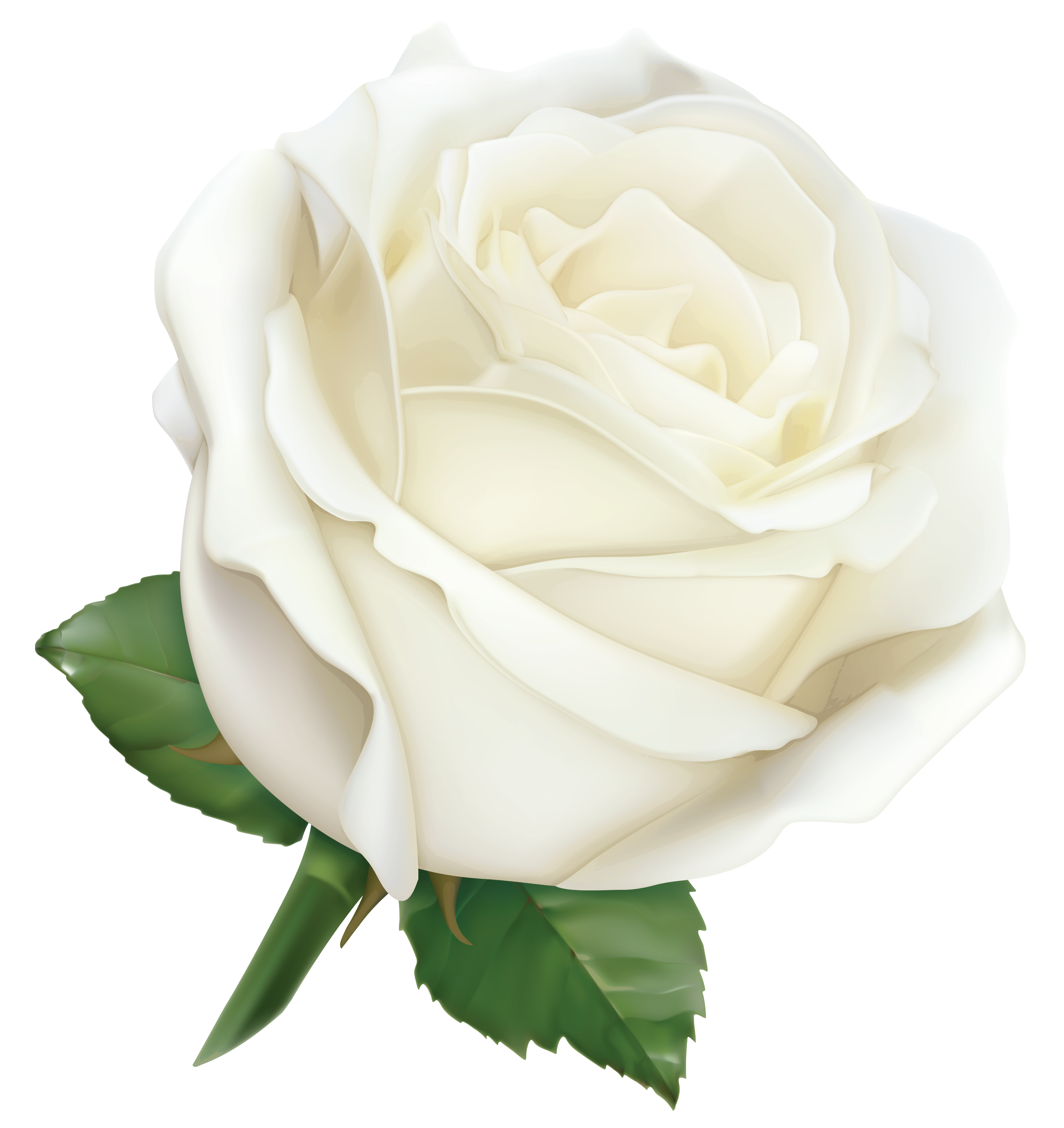 Large White Rose Png Clipart Image Gallery Yopriceville High Quality Images And Transparent Png Free Clipart White Rose Png White Rose Flower Clip Art