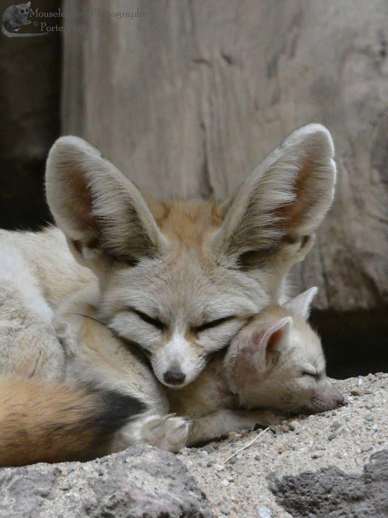 Fennec Fox And Kit By Mouselemur Fennec Fox Baby Farm Animals Cute Animals