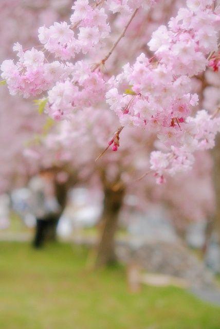 Vintageshabbypink Flowers Blossom Trees Blossom