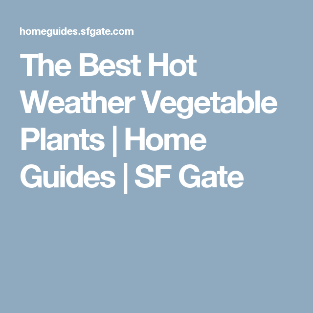 Hot weather vegetable plants