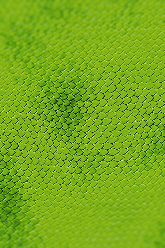 Green Reptile Skin With Images Reptile Skin Wallpaper Live