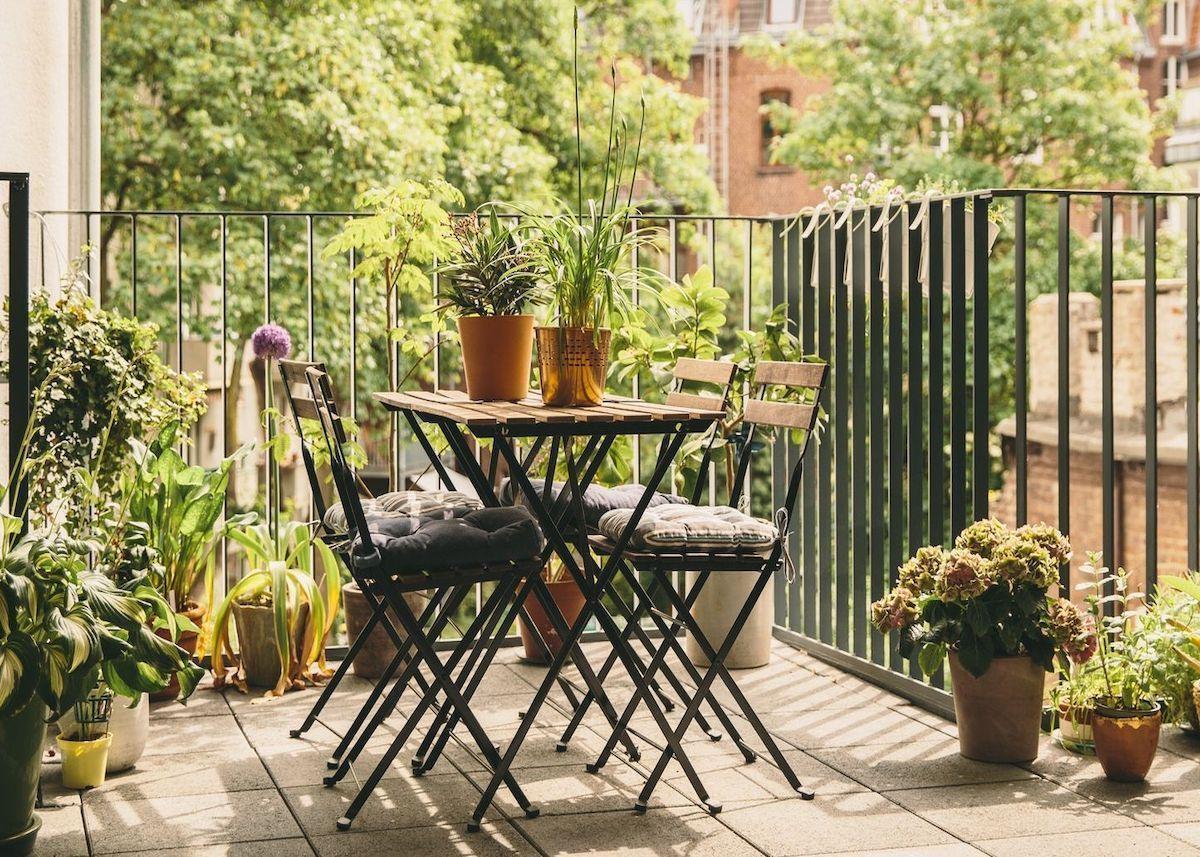 Plantes Pour Jardin Contemporain plante balcon ouest : 10 astuces pour l'embellir | jardin de