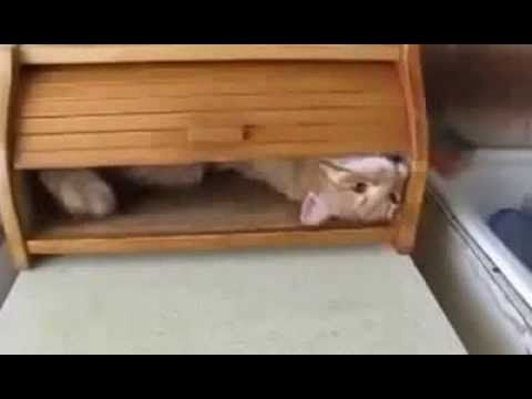 Cat In A Bread Box She Heard Weird Noises Coming From Her Bread Boxwhen She Finds Out