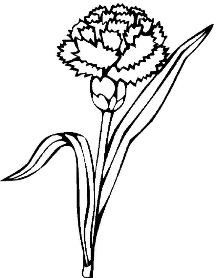 Carnation Flower Coloring Pages Flower Coloring Pages Carnation
