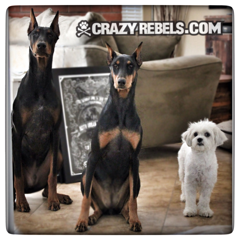 The Crazy Rebels Board Of Directors Crazyrebels Dobermans