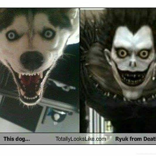 Pin By Justin Culmo On Funny Death Note Funny Death Note