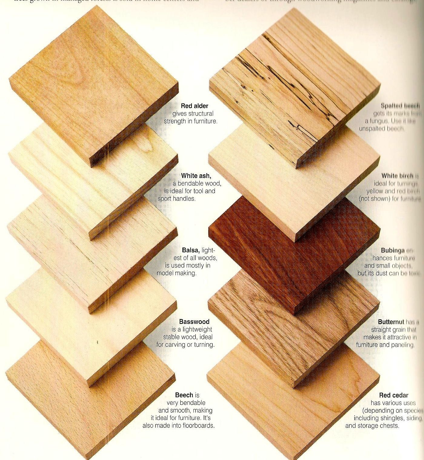 Wood Types Samples For Client Reference Beginner Woodworking