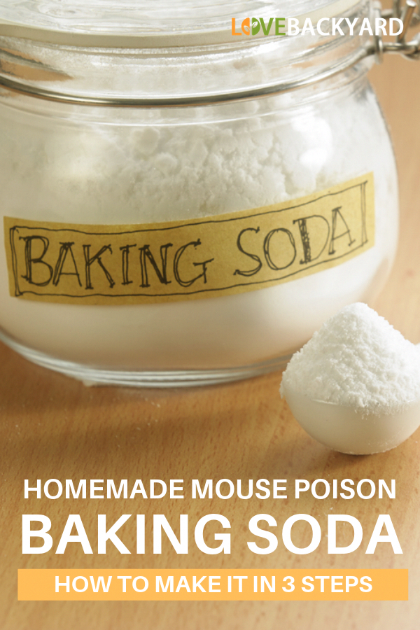The Basics of Pest Control Mouse poison, Pest control