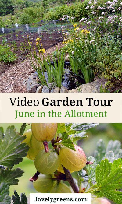 june video garden tour a peek into my neighbours gardens