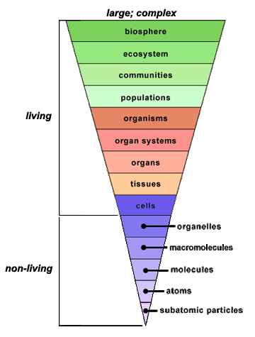 Pin by Elizabeth Dove on Ecology | Biology classroom, Sixth