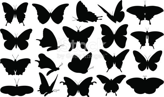 set of different butterflies isolated