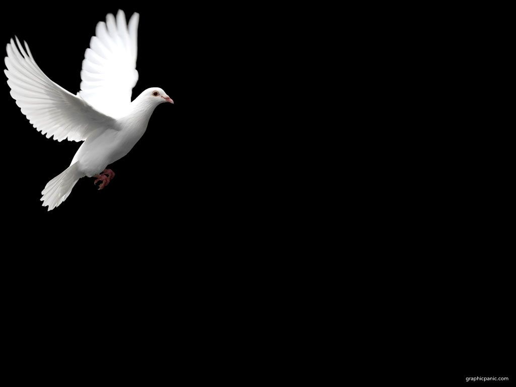 Cross and dove background - photo#6