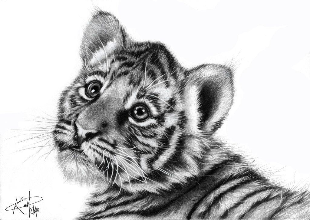 realistic baby animals Google Search Baby animal drawings