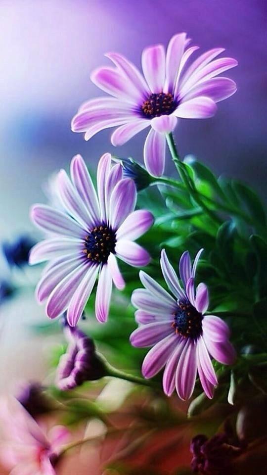 sabemos que a todas las mujeres les gustan las flores y por qu no decirlo a los hombres tambin quizs recuerden que cuando viv en can - Fotos De Flores Preciosas