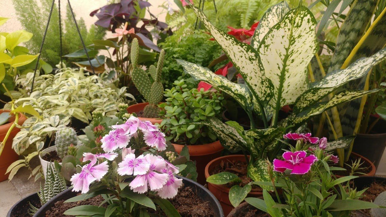 10 rare houseplants (India) with prices Plant transport