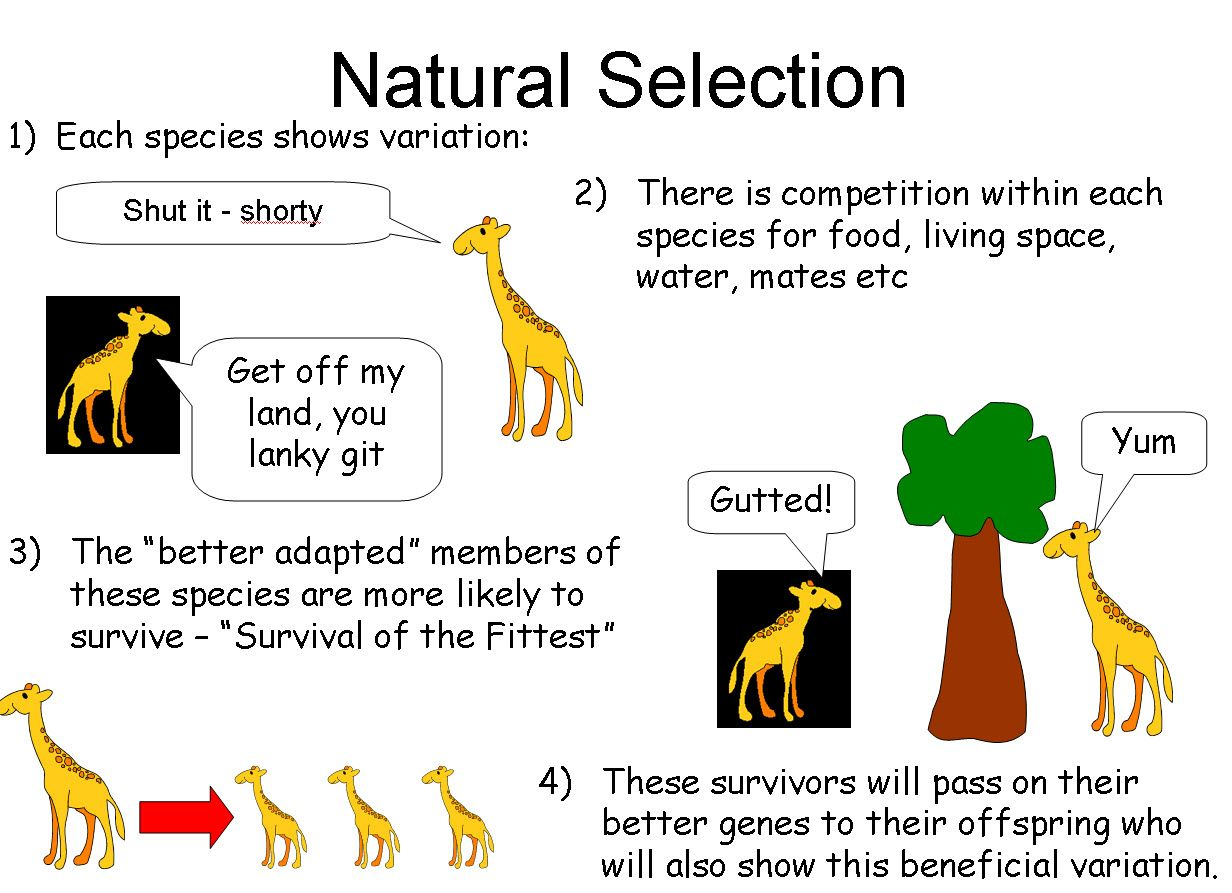 the theory of evolution interpretation by According to darwin's evolutionary theory, natural selection is a matter of  after  some years of observations, analysis and findings, wallace wrote an essay in.