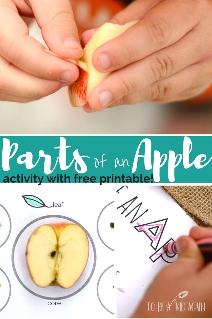 Parts of an Apple: Activity + Free Printable | Kids Learning Ideas ...
