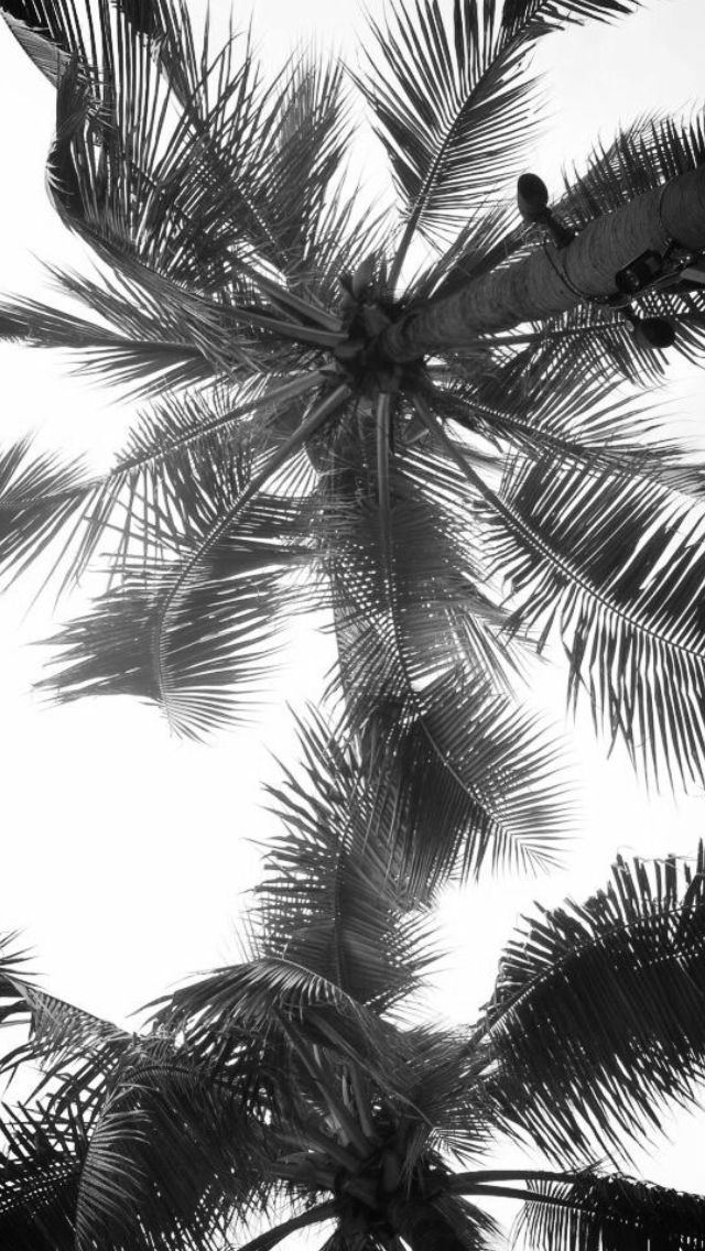 Black and white palm trees Iphone wallpapers Pinterest