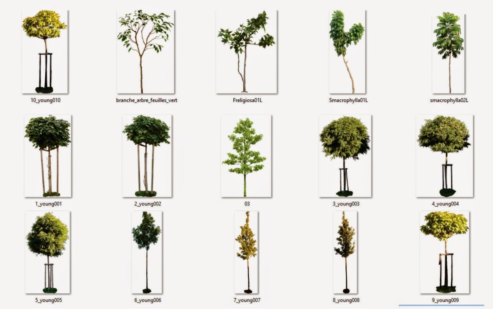 Rboles con fondo transparente png arq recursos - Arboles y arbustos ...