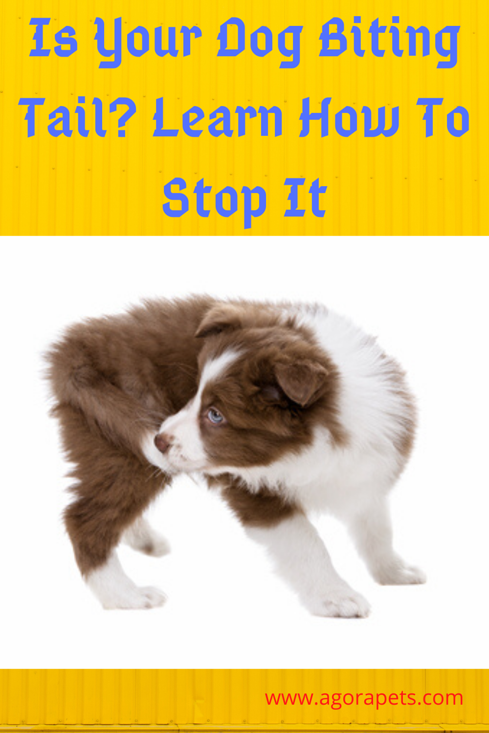 Is Your Dog Biting Tail Learn How To Stop It Dog Biting Puppy Biting Your Dog